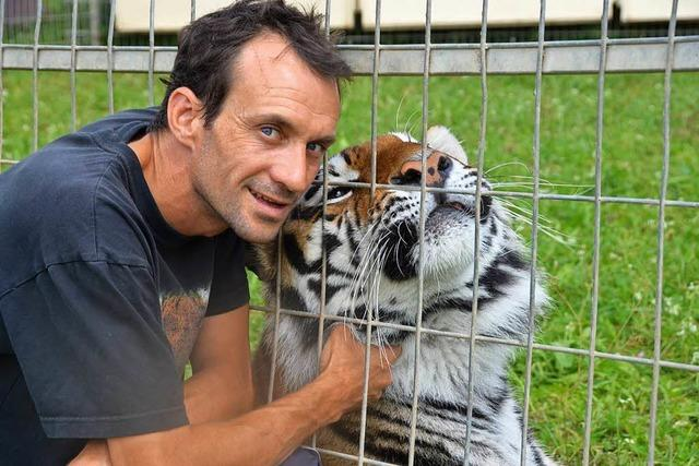 Löwen und Tiger ziehen in den neuen