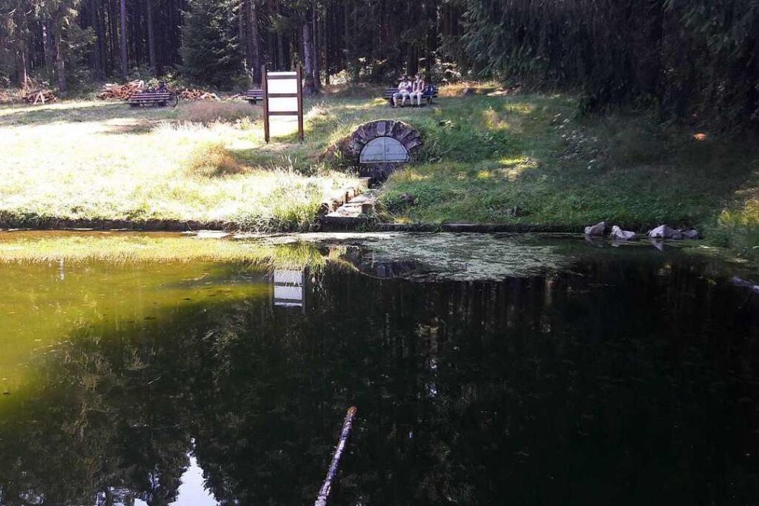 An dieser Stelle auf dem Geisberg trit...ie Quelle liegt weiter hinten im Wald.  | Foto: Christian  Kramberg