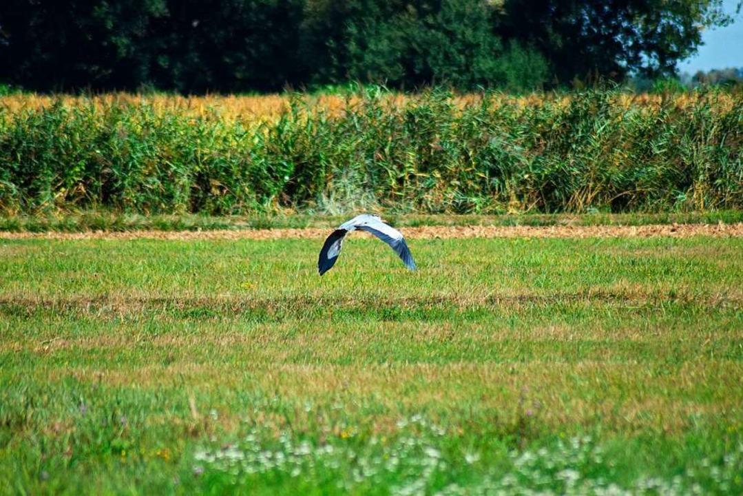 Weite, offene Flächen: Die Wiesenlands...ist ein perfekter Jagdgrund für Vögel.  | Foto: Julia Trauden