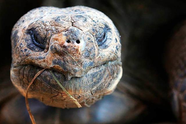 Manche Tiere werden steinalt – und sind dabei sehr vital