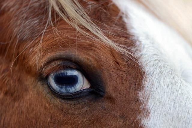 Reiterin stürzt und wird von Pferd mitgeschleift – Lebensgefahr