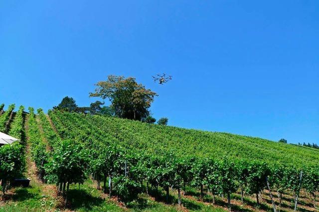 Die Zukunft des Weinbergs könnte vollautomatisiert sein