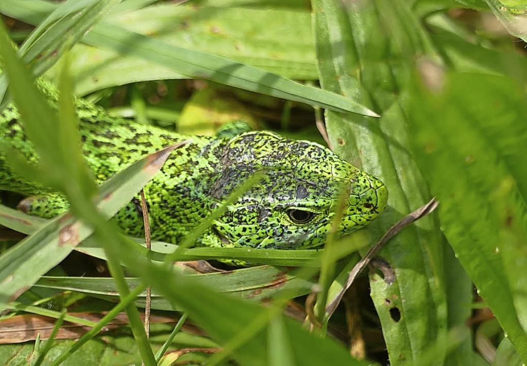 Hui! Tierische Entdeckung im Gras  | Foto: Silke kohlmann