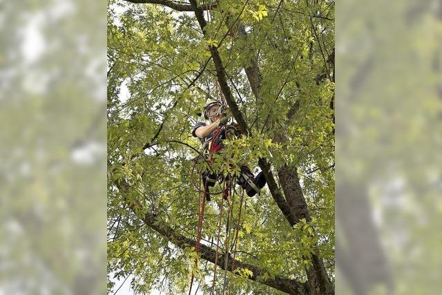 Beruflich auf Bäume steigen