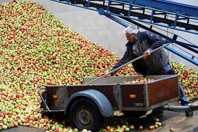 Wohin mit den ganzen Äpfeln in diesem Jahr?