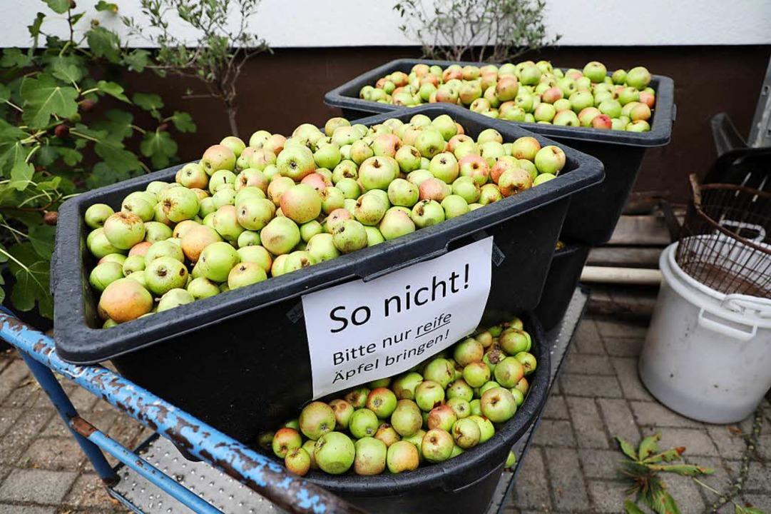 Fürle nimmt allerdings nicht alle Äpfe...eifes oder faules Obst wird abgelehnt.  | Foto: Christoph Breithaupt