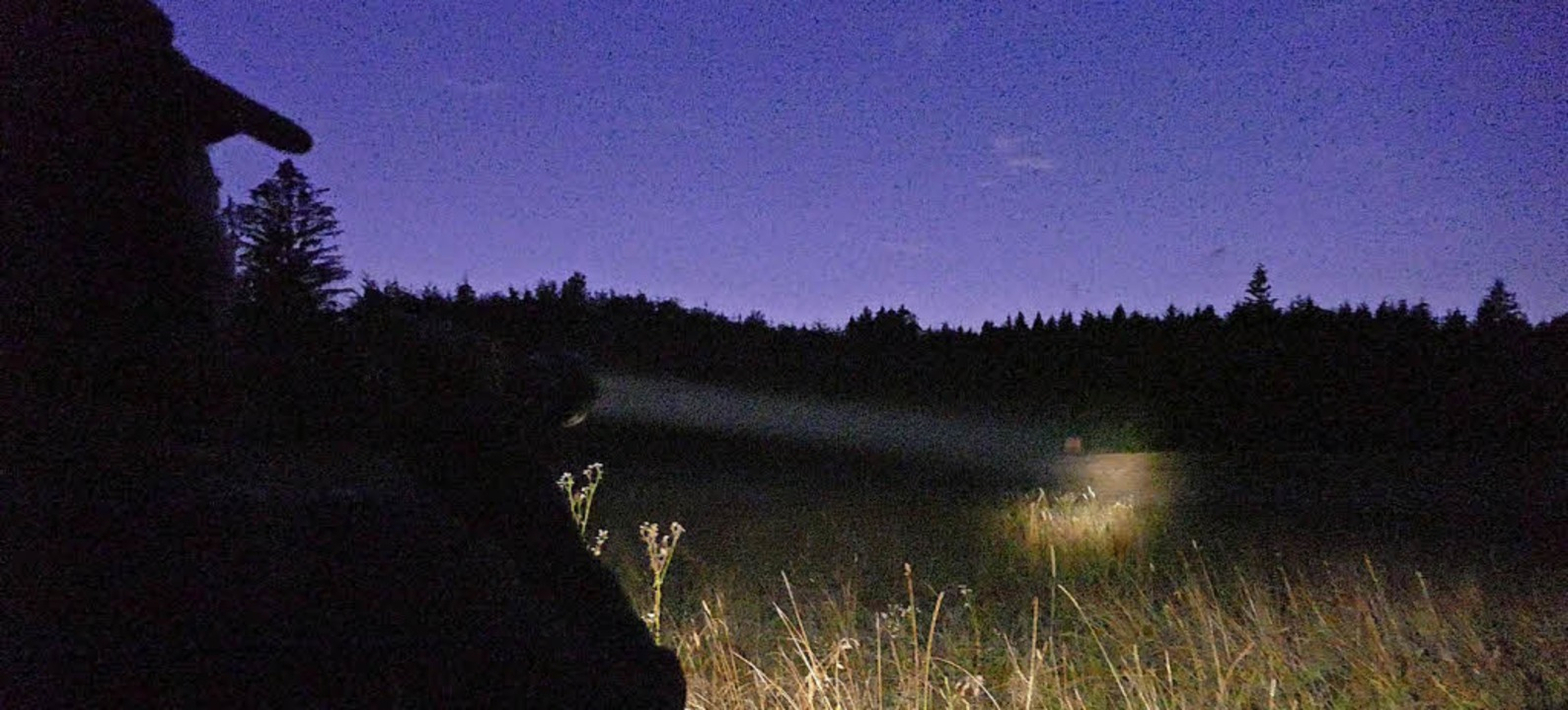 Wenn es zu dunkel ist, wird das Jagen selbst mit Taschenlampe unmöglich.  | Foto: Jannik Jürgens