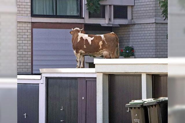 Wie kommt die Kuh aufs Dach?