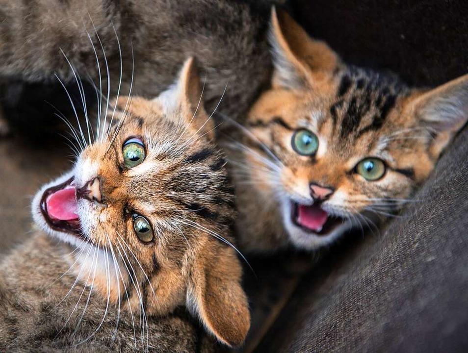 Wildkatzen  | Foto: dpa