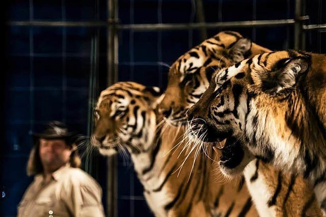 Demonstrationen gegen Tiernummern im Zirkus in Wyhlen geplant