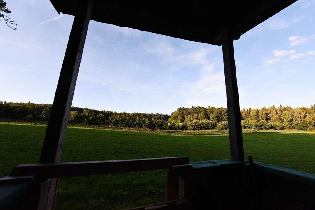Der Blick vom Hochsitz im Hertener Wald  | Foto: Jonas Hirt