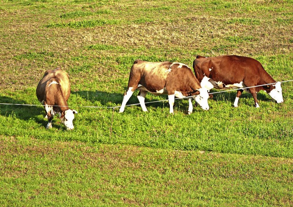 Die Kühe haben diesen Sommer über Mühe... wurde im Reichenbachtal aufgenommen.   | Foto: Peter Stellmach