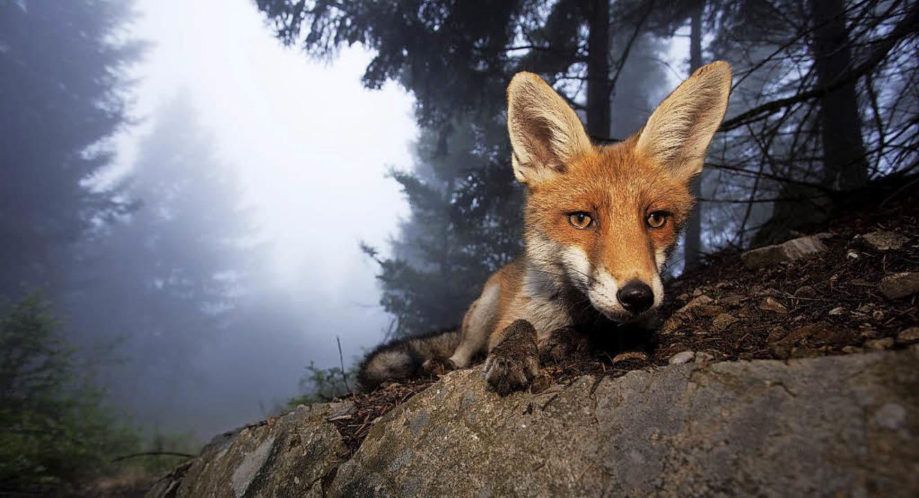 Eindrucksvolle Fotos von Wildtieren si... einer Freilichtausstellung zu sehen.     Foto: Klaus Echle