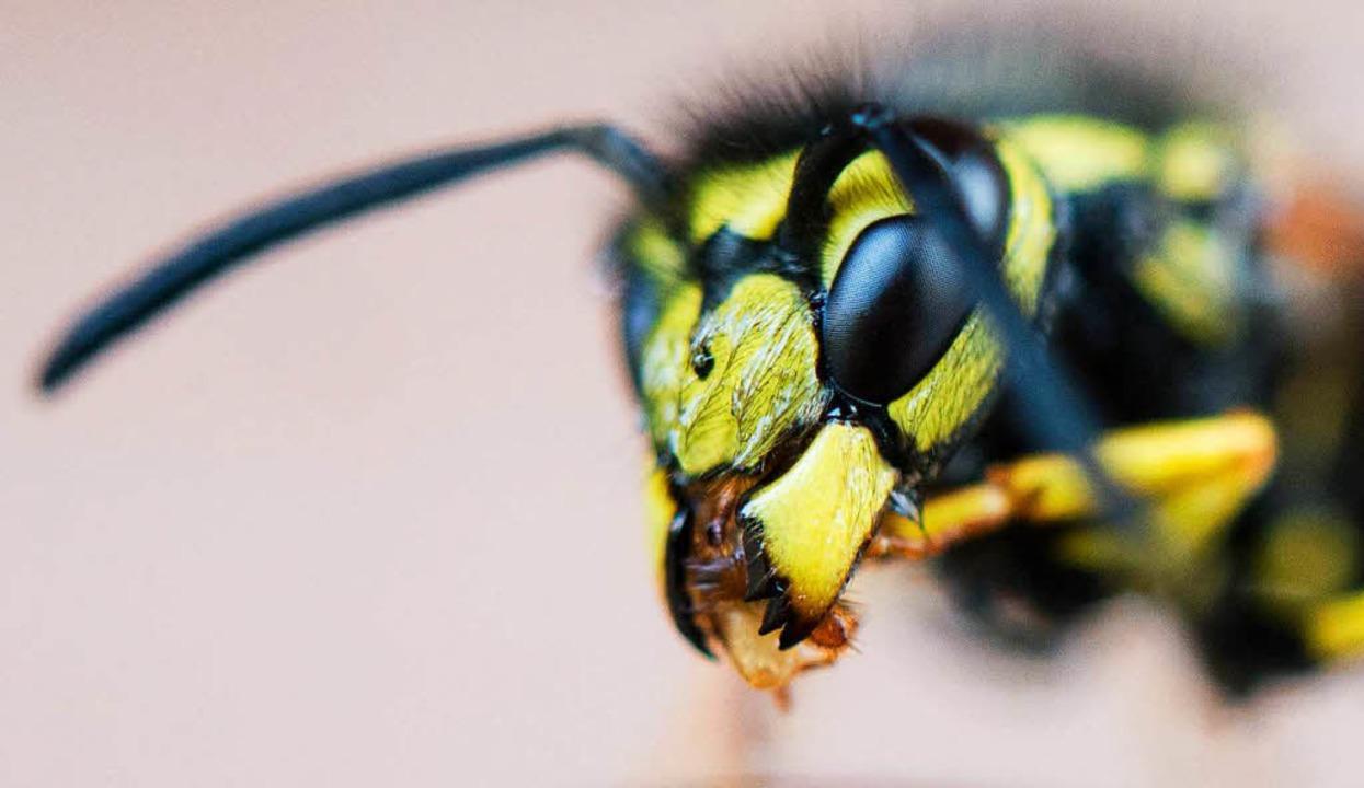 Eine Wespe sitztauf einem Tisch.  | Foto: dpa