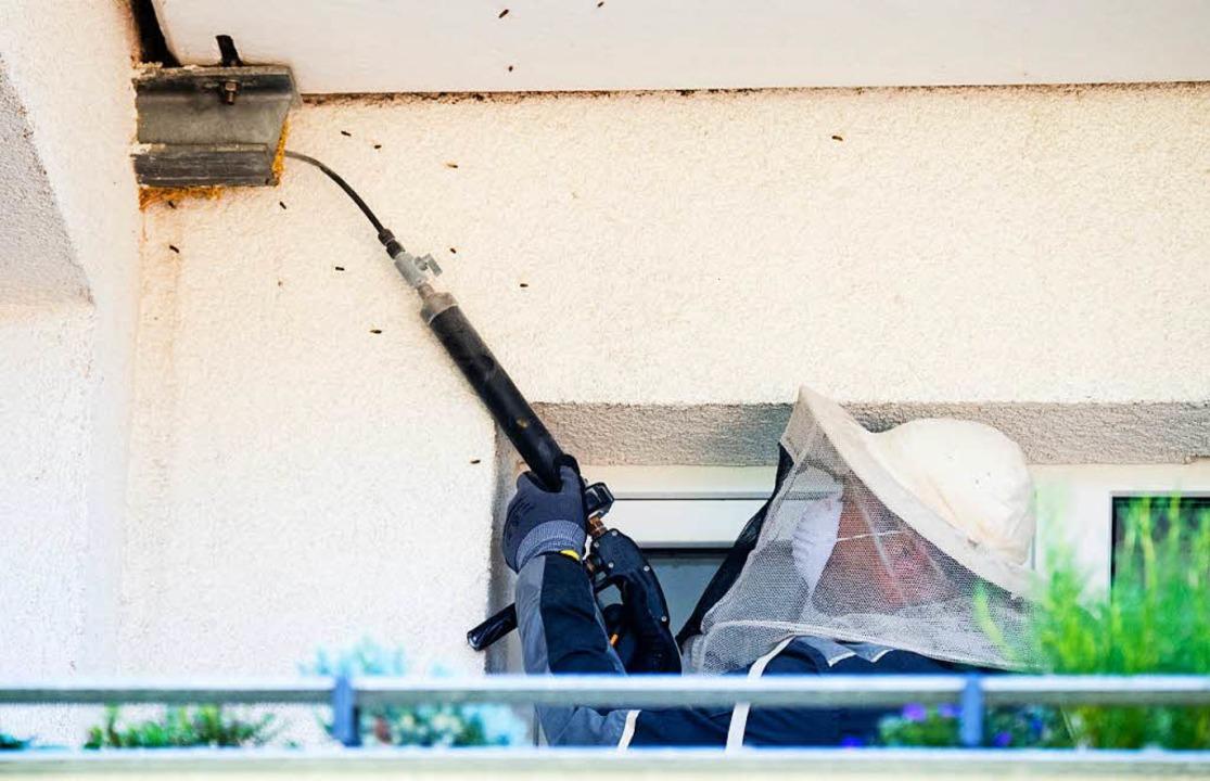 Hier behandelt ein Schädlingsbekämpfer...ezeiten von bis zu zwei Wochen üblich.  | Foto: dpa