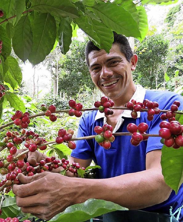 600 Kleinbauern arbeiten inzwischen in der Kooperative Cosatin.   | Foto:   Cosatin