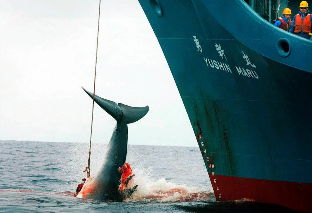 Japanischer Walfänger im Jahr 2006   | Foto: dpa