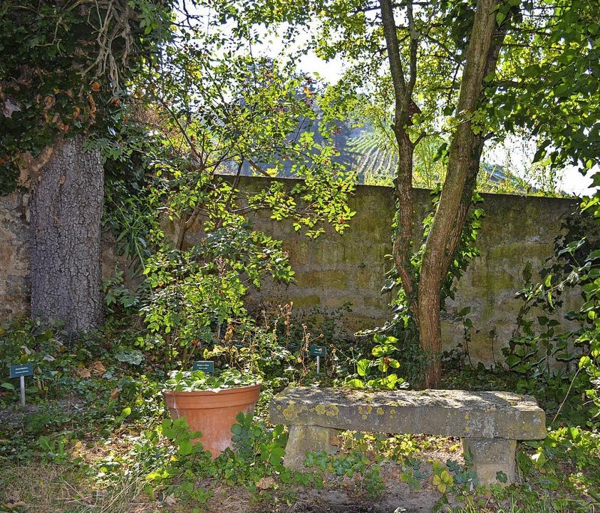 Im Magdalenengarten: ein lauschiges Plätzchen an historischer Stelle   | Foto: Gabriele Hennicke