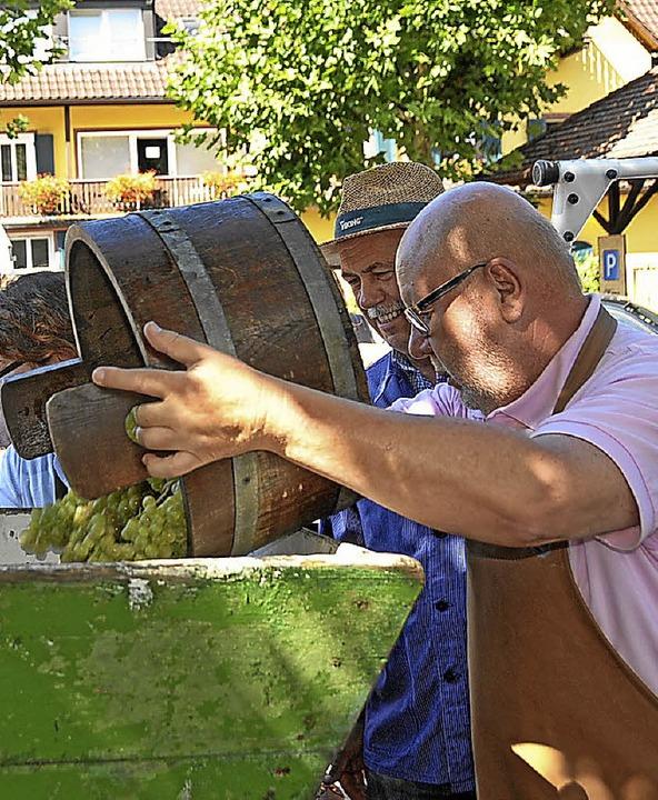 Feriengäste schütteten die Trauben in die Traubenmühle.  | Foto: Herbert Trogus