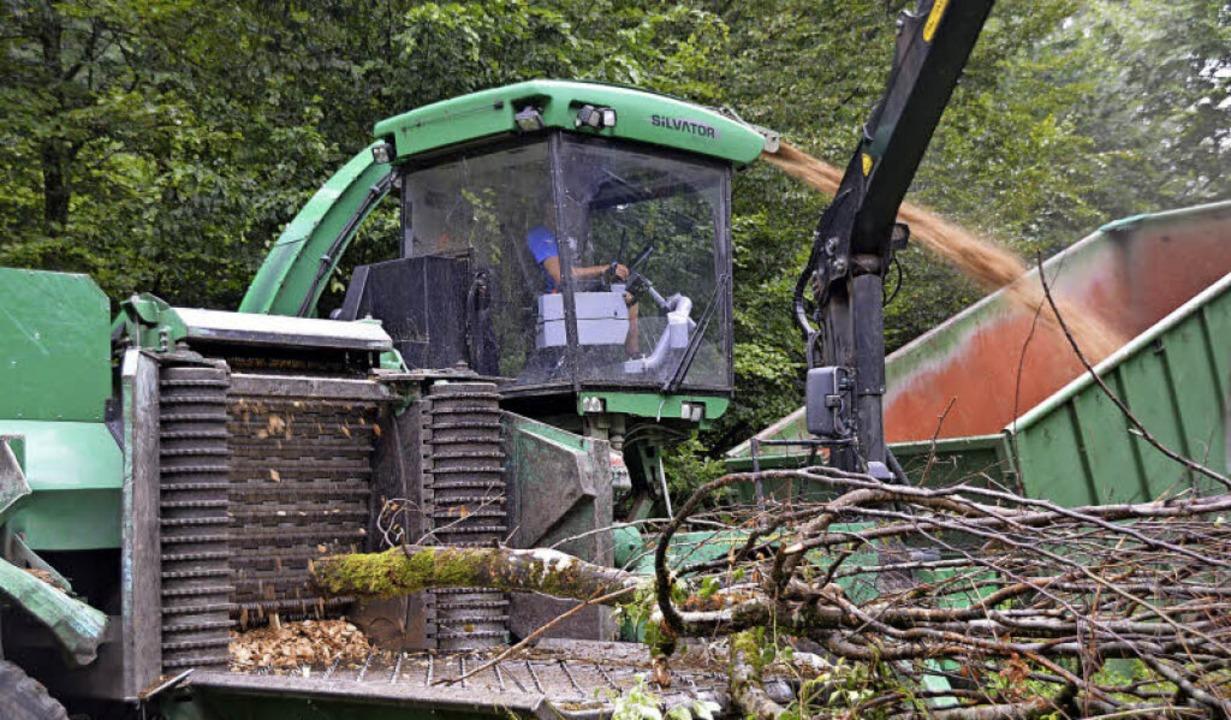 Vor Ort werden Bäume zu Hackschnitzeln verarbeitet.  | Foto: Horatio Gollin