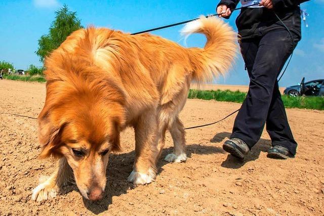 Sorgen der Hundehalter um Giftköder sind laut Behörden unbegründet
