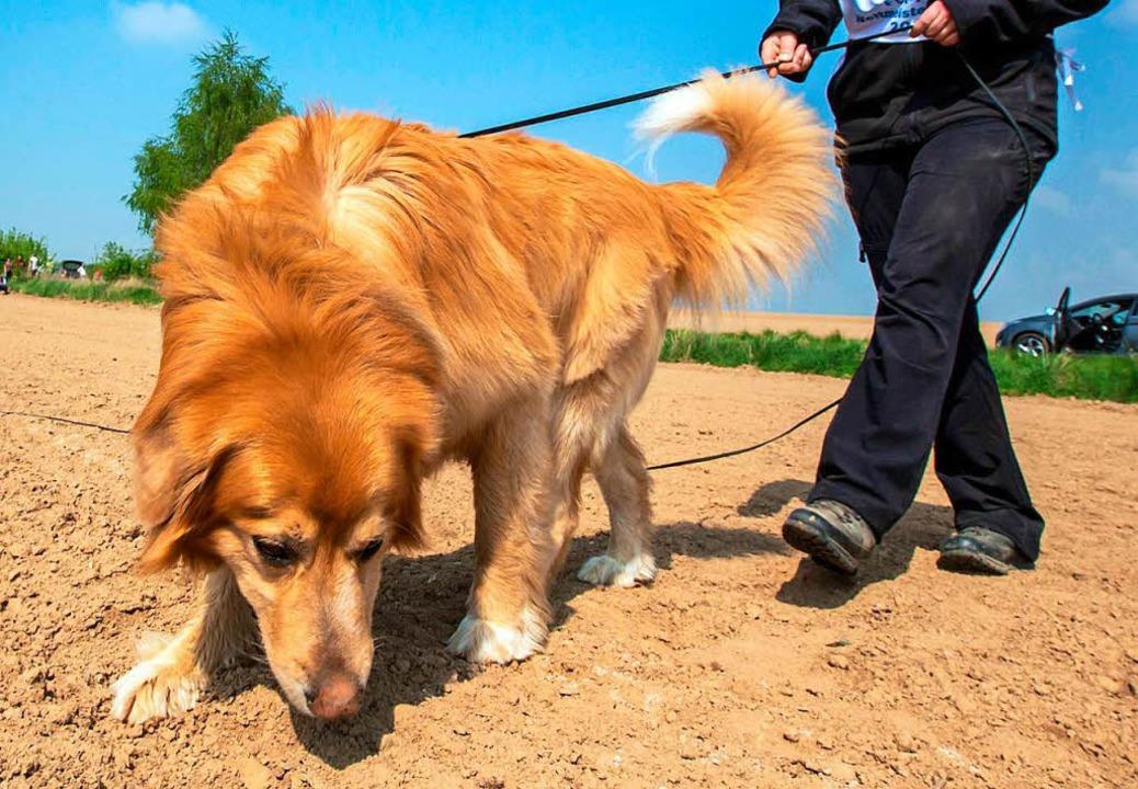 Am besten ist es, wenn Hunde nichts fressen, was draußen herumliegt.  | Foto: Michael Reichel