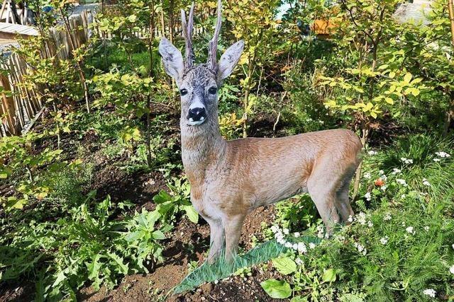 Landesgartenschau zeigt, was sich im Wald alles entdecken lässt