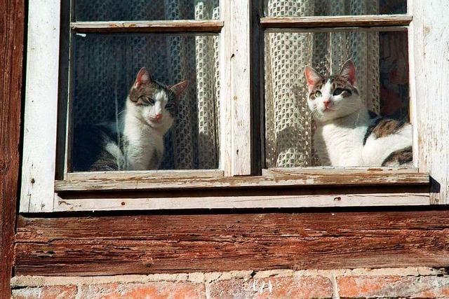 Mehr als 100 Katzen in Norsingen gehalten – Nachbarn beklagen kranke Tiere und Müll