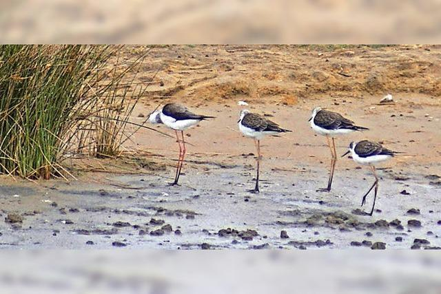 Pagham Harbour ist ein wahres Paradies für seltene Vogelarten