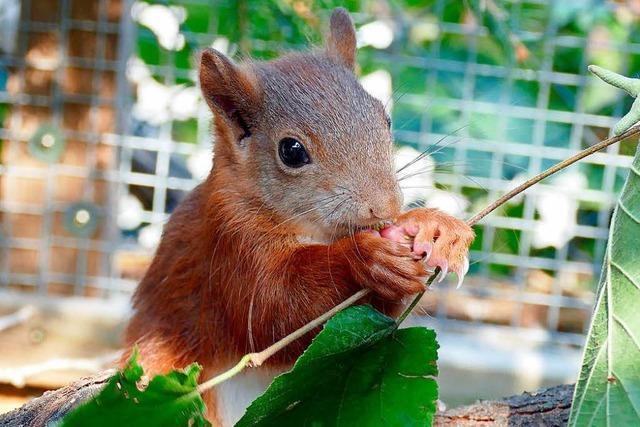 Das Eichhörnchen-Mädchen Pippilotta ist wieder draußen unterwegs