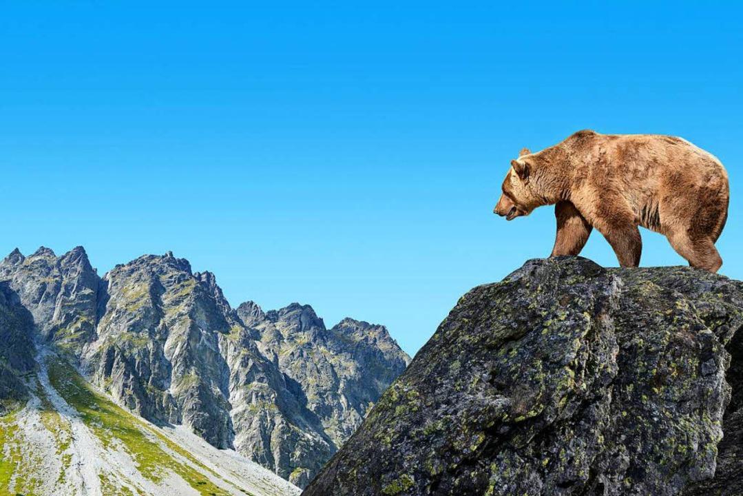 Ein Bär in der Hohen Tatra (Slowakei)  | Foto: -