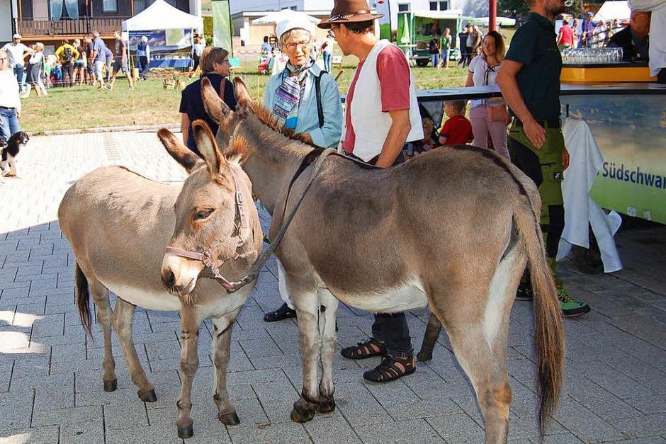Wer wollte, konnte beim Biosphärenfest diese beiden freundlichen Esel kennenlernen. (Foto: Claudia Renk)