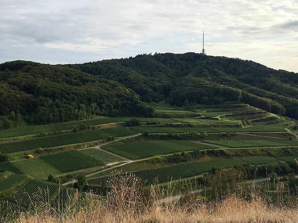 Blick vom Badberg auf die Weinberge in Oberbergen und den Totenkopf.  | Foto: Bernhard Amelung