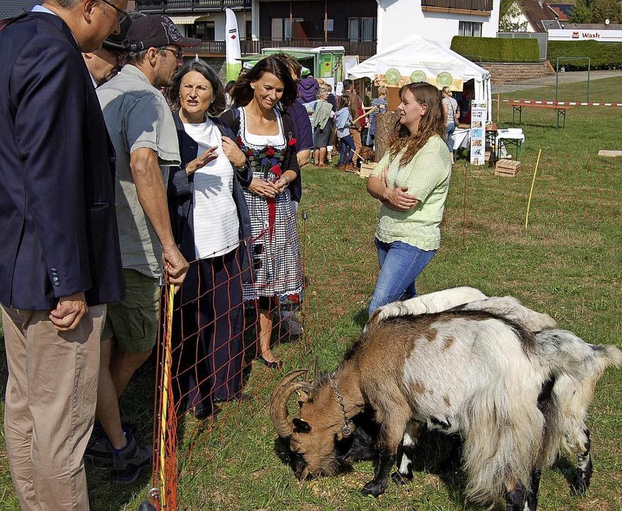 Nach der erfolgreichen Runde um das Fe...Politikerinnen über die Ziegenhaltung.  | Foto: Claudia Renk