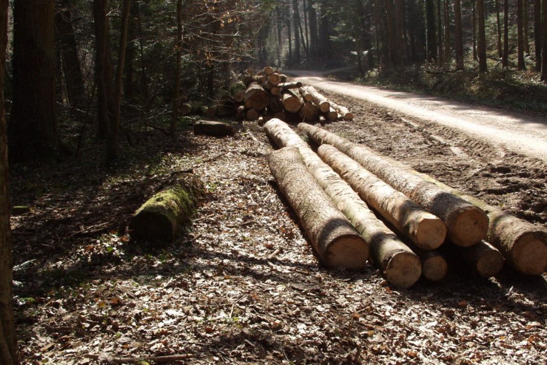 In diesem Waldstück wurde die Leiche von Heidrun Pursche gefunden.  | Foto: brigitte sasse