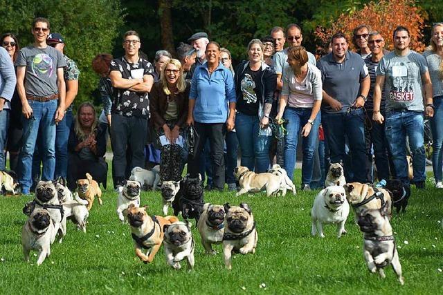Zweites Mopsrennen im Dreiländergarten