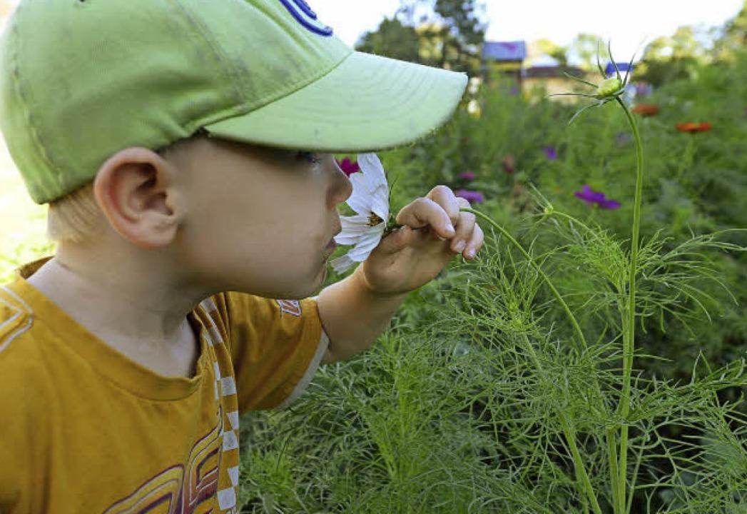 Wie duften verschiedene Blumen? Das kö...sie mit in ihre Gärten nehmen konnten.  | Foto: Ingo Schneider
