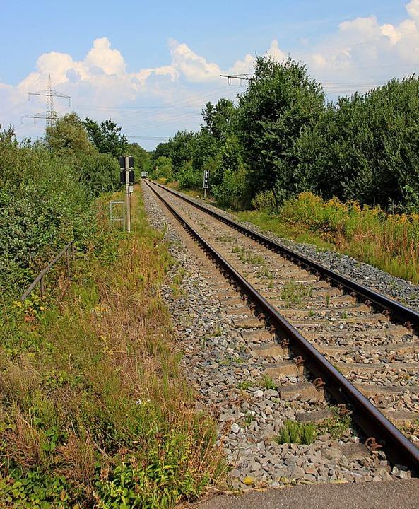 Die Bahnlinie im Ried zwischen Gottenh...sie künftig in einem Trog unterqueren.    Foto: Mario Schöneberg