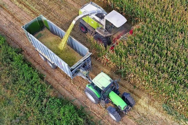 Maschinen fressen sich durch Maisfelder