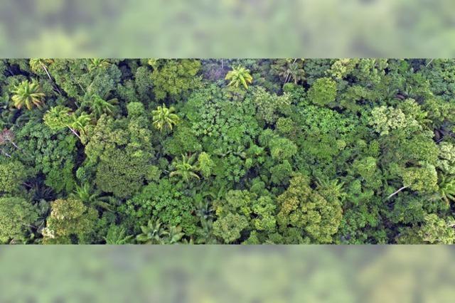 Wie man den Regenwald nutzen und gleichzeitig schützen kann