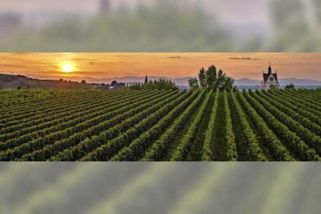 Endingen umgeben von Weinbergen und Sonnenstrahlen