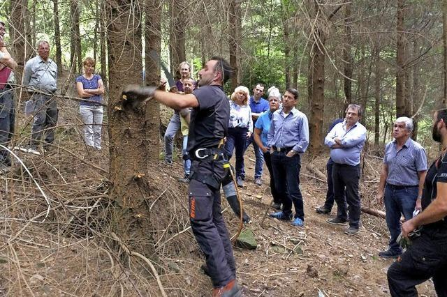 Hitzewelle hinterlässt Spuren im Wald