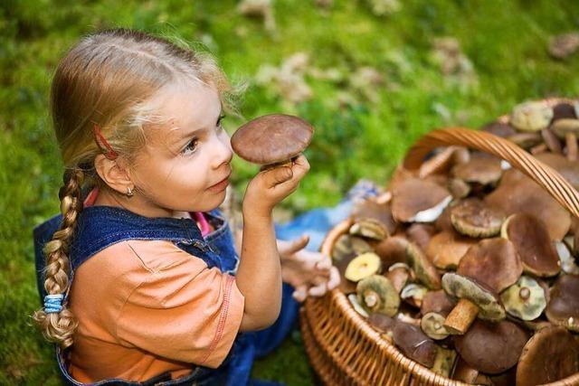 Worauf Pilzesammler in der Region achten müssen