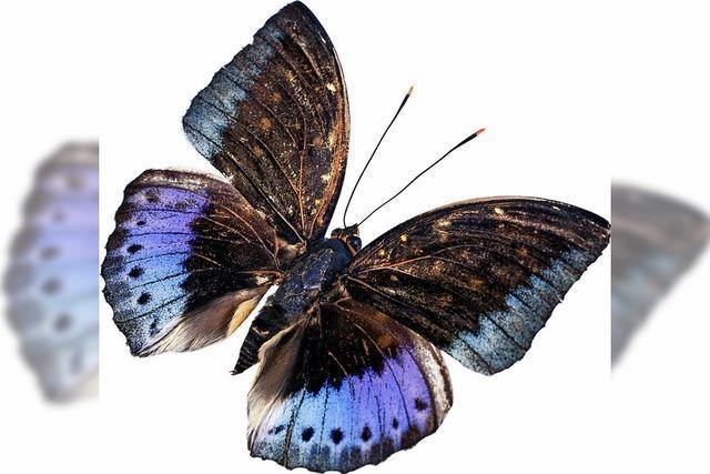 Im Reich der Schmetterlinge