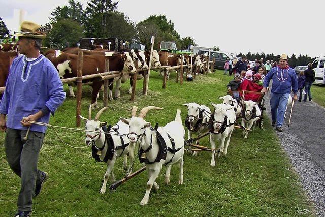 Weidefest in Gersbach