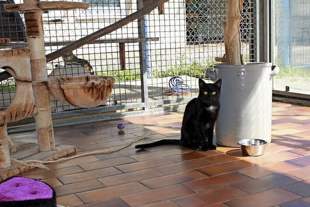 Schuttertal stimmt dem Tierheimvertrag zu