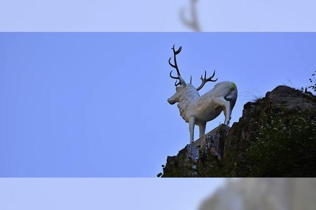 Der weiße Hirsch