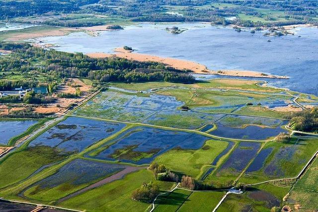 Artenreiche Feuchtgebiete gehen weltweit rapide zurück
