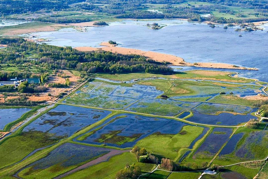 Die Oset-Rynningeviken sind ein Vogelschutzgebiet in Schweden.  | Foto: dpa