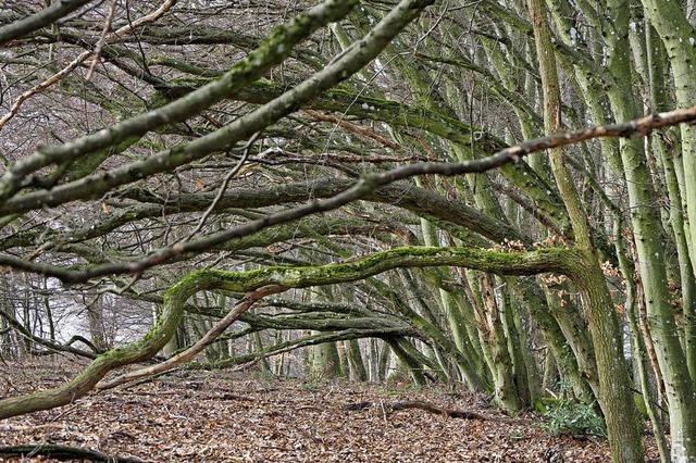 Naturerbe Langenhard